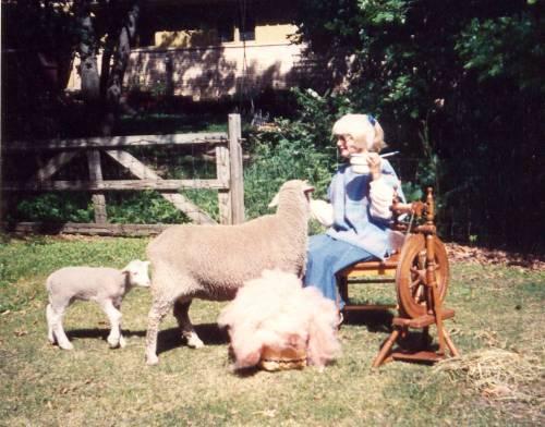 sheepy-days