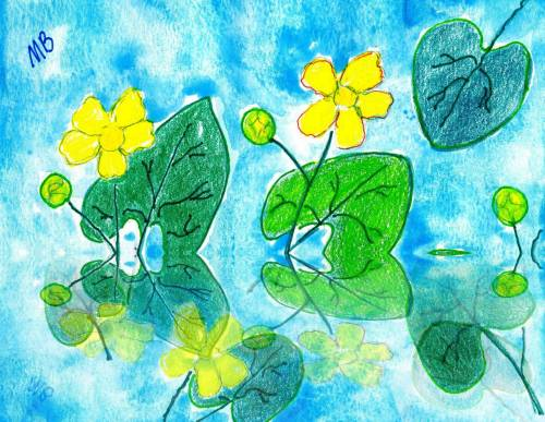 Marsh Marigolds--3