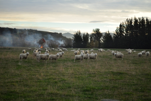 Where sheep may safely graze 2